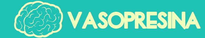 hormonas-fidelidad-vasopresina