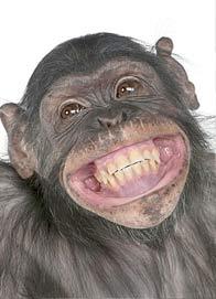 los monos se rien